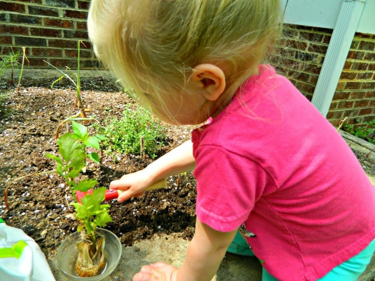 HANDS ON BOTANY! Gardening is a wonderful hands on way to introduce botany to children. Find more great hands on ideas on ChildLedLife.com