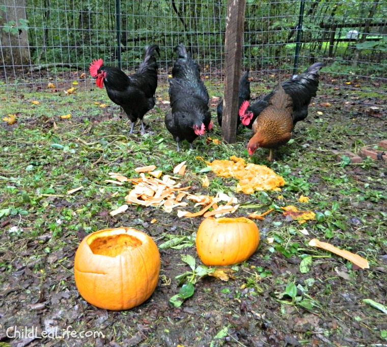 Fall Pumpkin Soup with Children Feed the Chickens
