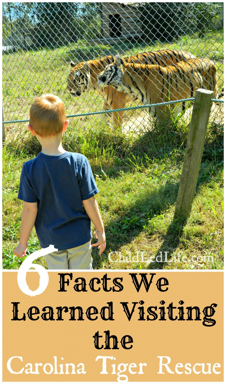 We had a lot of fun on our Carolina Tiger Rescue field trip with ChildLedLife.com