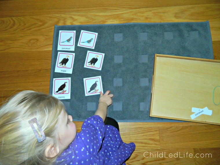 Vocabulary with 3 part cards lessons for 2 year old using Royal Road to Reading program from Age of Montessori. Find more on my review on ChildLedLife.com