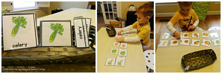 Hands on learning with 3 Part Cards! Botany study on ChildLedLife.com