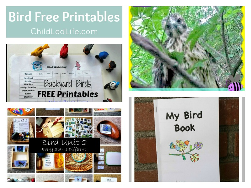 4 Great FREE Printables to help Welcome Spring Birds on ChildLedLife.com