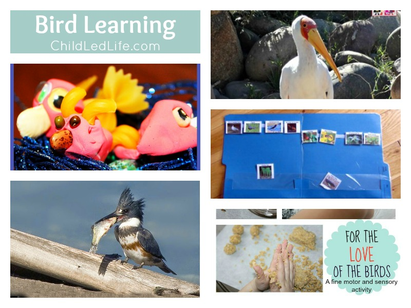 6 Helpful Posts to help your kids learn about Spring Birds on ChildLedLife.com