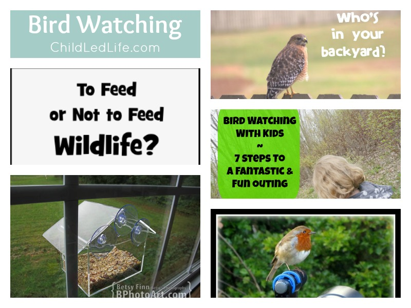6 Fun Posts to help your kids with Spring Bird Watching on ChildLedLife.com