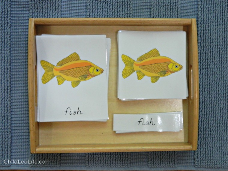 Fish 3 Part Cards on the 12 Months of Montessori Learning Montessori Inspired Zoology Fish Unit on ChildLedLife.com