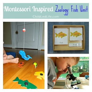 Montessori Inspired Zoology Fish Unit on Child Led Life 2