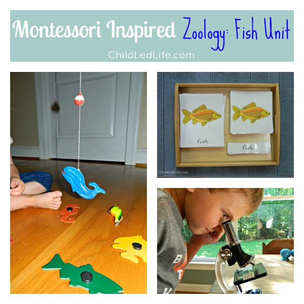 Montessori Inspired Zoology Fish Unit