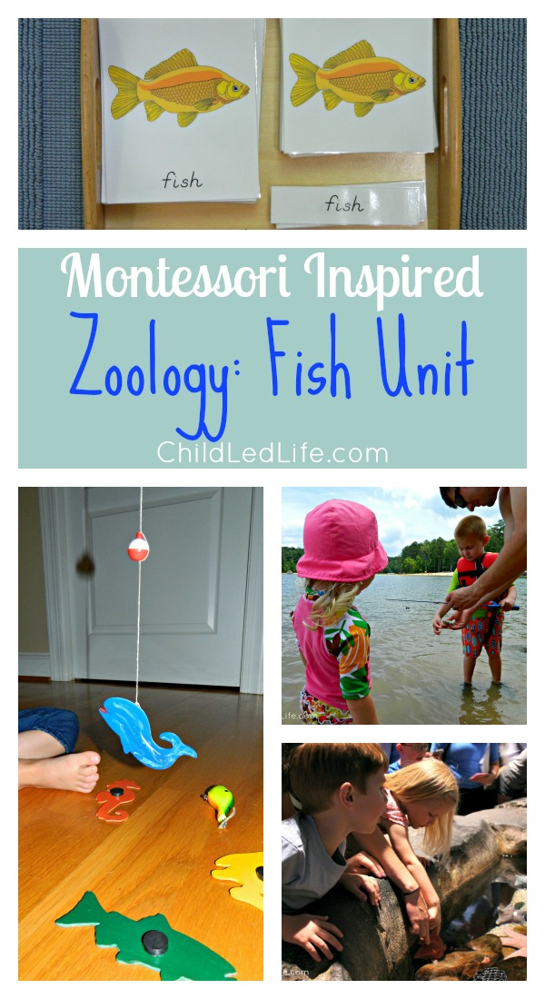 Montessori Inspired Zoology Fish Unit on ChildLedLife.com