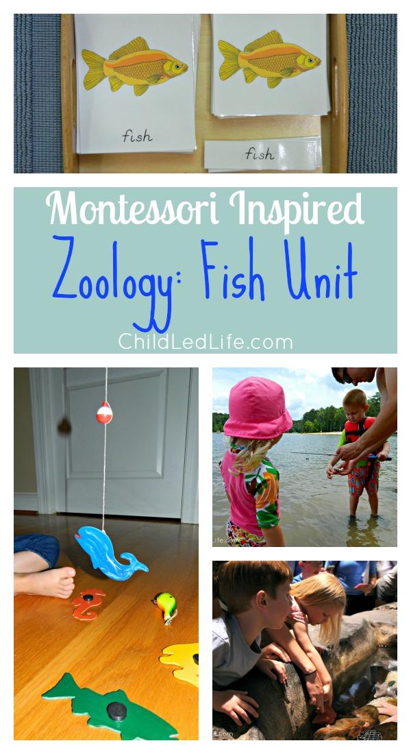 Montessori Inspired Zoology Fish Unit on ChildLedLife.com
